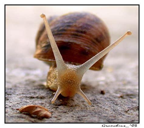 alimentazione lumache di terra treknature snail photo
