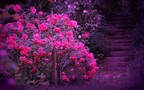 beautiful colours 20 mind blowing beautiful pictures