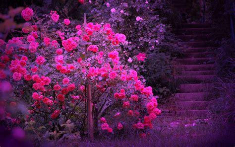 beautiful colours beautiful color roses wallpaper 18577543 fanpop