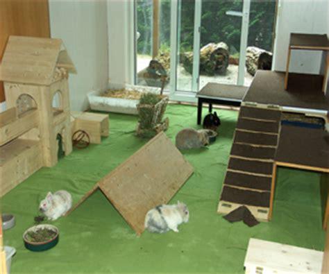 kaninchen in der wohnung halten praxis f 252 r kleine heimtiere dr anja ewringmann