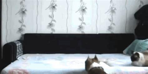 camara oculta hermana c 225 mara oculta en la habitaci 243 n de la hermana la perra ya