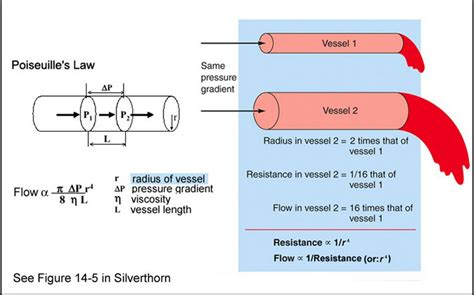 resistance in parallel blood flow determinant of resistance to blood flow physiology plus