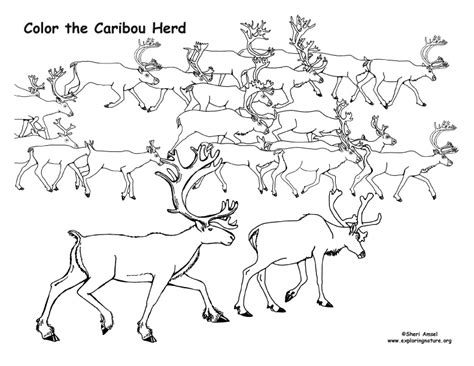caribou color caribou herd coloring page
