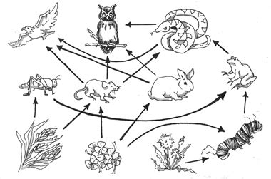 owl food chain colouring pages