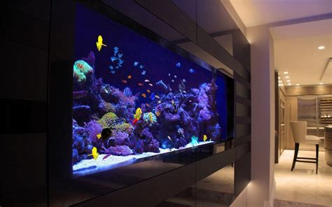 aquarium design sydney 25 best ideas about marine fish on pinterest tropical