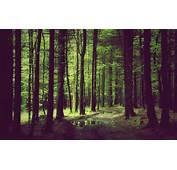 Forest Desktop Wallpaper