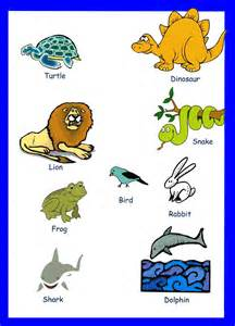 animal pictures for toddlers animals vocabulary for
