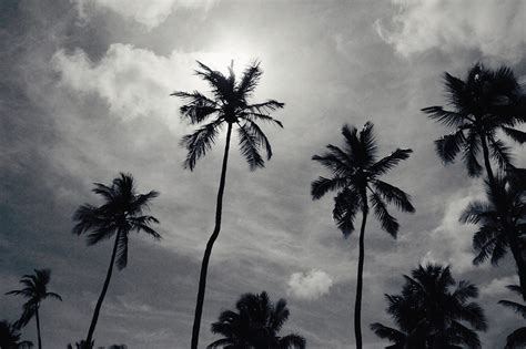 4 black tree palm tree photography black white print decor nature