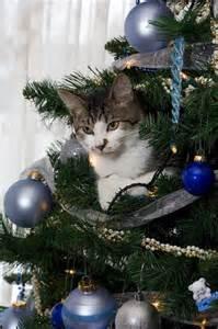 christmas tree cats 40 pics izismile com