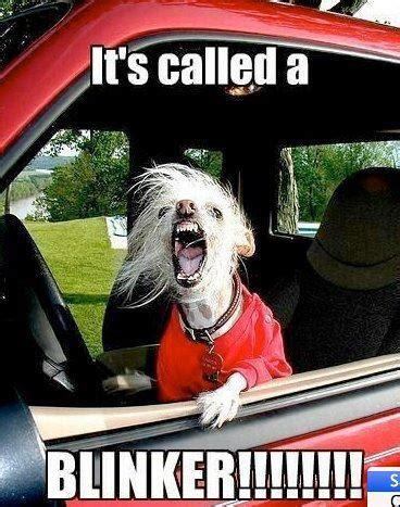 Dog Driving Meme - driving lilspydermunkey