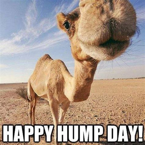 hump day memes happy hump day meme wednesday quotes images to rejuvenate
