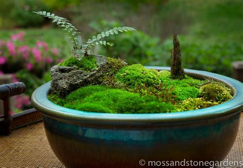 tabletop rock garden tabletop moss garden must make one of these