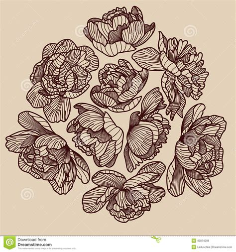 peony drawing decorative composition stock vector image