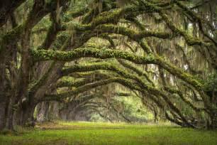 Landscaping Savannah Ga by Pics Photos Charleston South Carolina