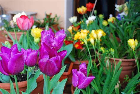 terrazze in fiore terrazzi in fiore le foto delle vincitrici casa it