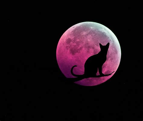 Cat Black Pink black cat and pink moon digital by marianna mills