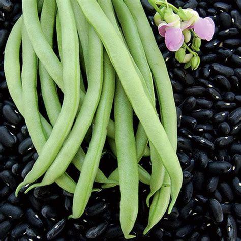 black valentine bean seeds planet natural