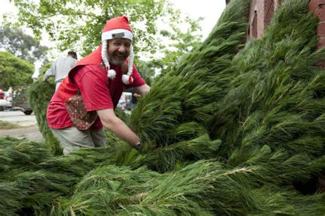 what you should know about christmas trees