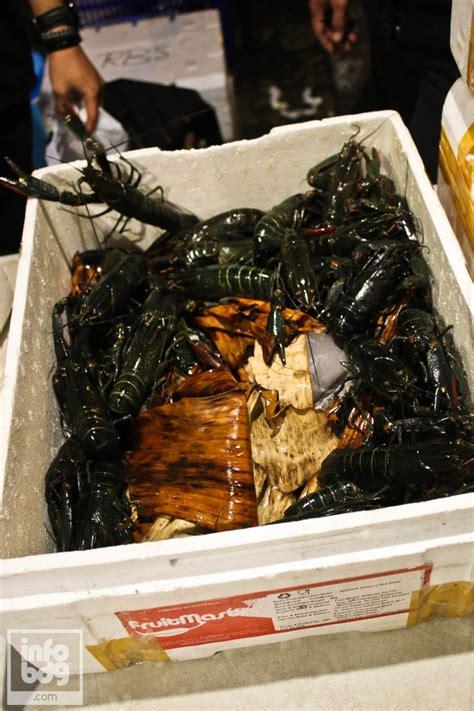 Bibit Lobster Air Tawar Di Bandung lobster premium ala babylobster infobdg infobdg
