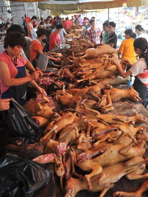 do japanese eat dogs why do white think asian guys eat dogs girlsaskguys