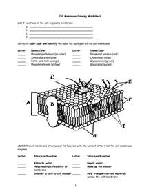 10 best images of cell membrane diagram worksheet cell