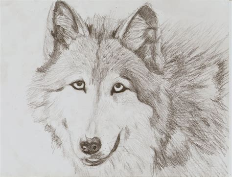 wolves drawings wolf drawings new calendar template site