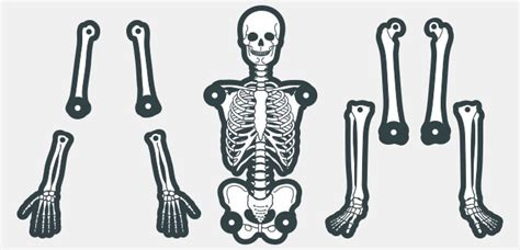 skeleton template 6 best images of large printable skeleton template