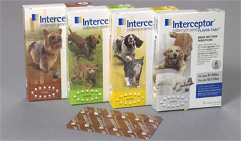 heartworm medicine for puppies interceptor heartworm medicine for dogs cats at drs