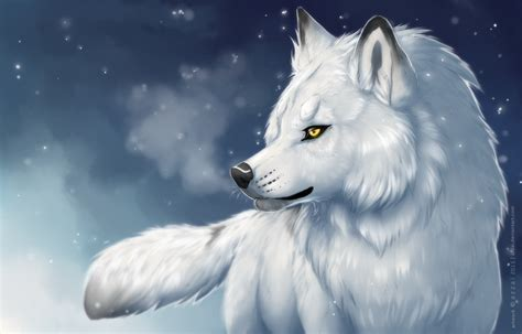 Seven White Wolves white wolf in snow drawing www imgkid the image