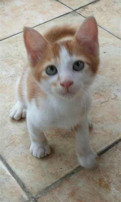 Vaksin Dan Obat Cacing Kucing penyebab kucing muntah dan cara mengatasinya binatang