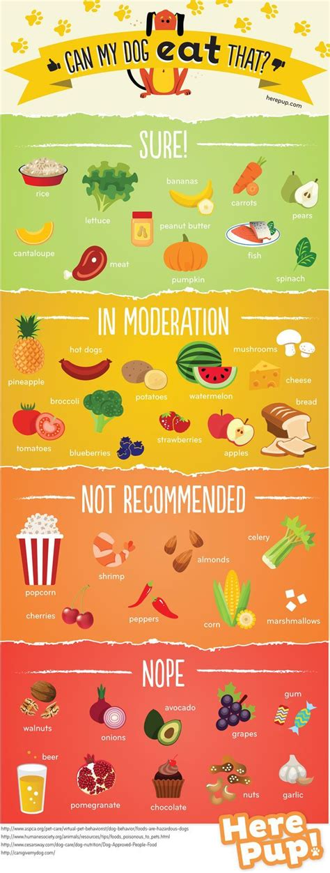list of foods dogs can t eat the common foods dogs can and can t eat infographic lifehacker australia