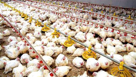 House Plan Pdf granjas de pollos a 45 m2 nave granja de pollos granja