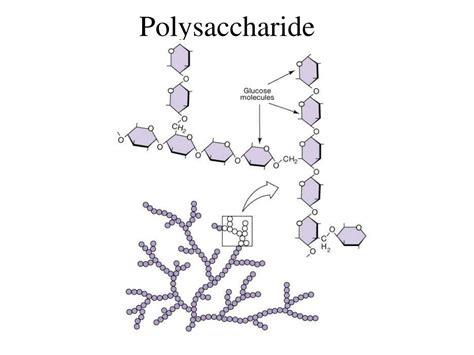 diagram of a polysaccharide polysaccharide related keywords polysaccharide