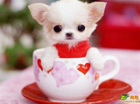 teacups dogs tea cup
