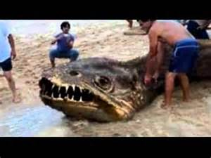25 Mysterious Creatures Caught On Tape Youtube mystery creature washes up on shore in philippines after