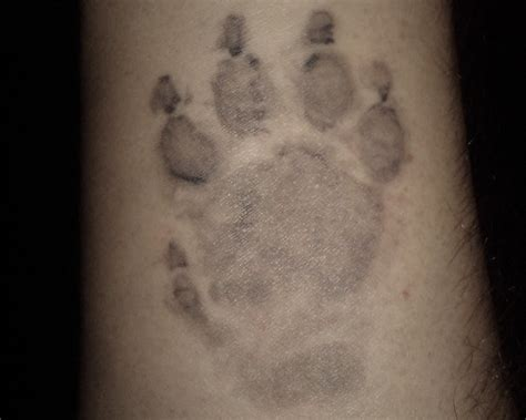 dog footprint tattoo 15 playful paw tattoos me now