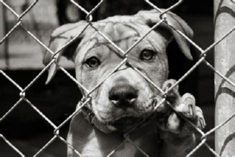 cani in gabbia in gabbia