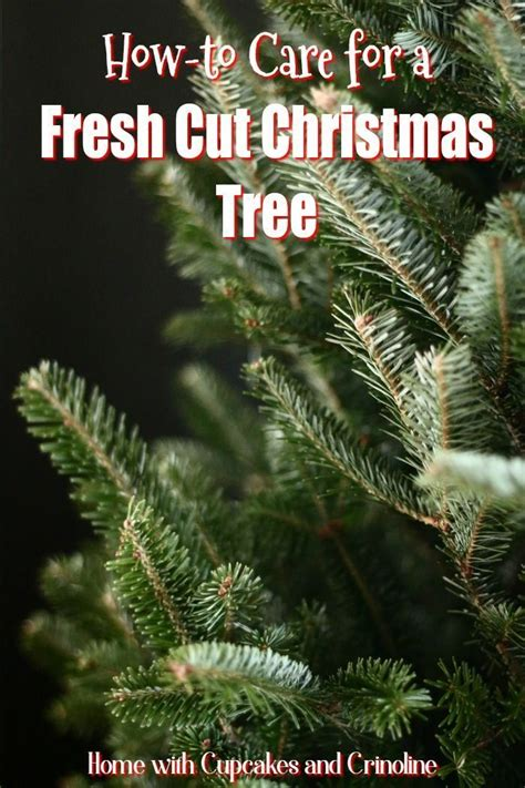 25 b 228 sta fresh cut christmas trees id 233 erna p 229 pinterest