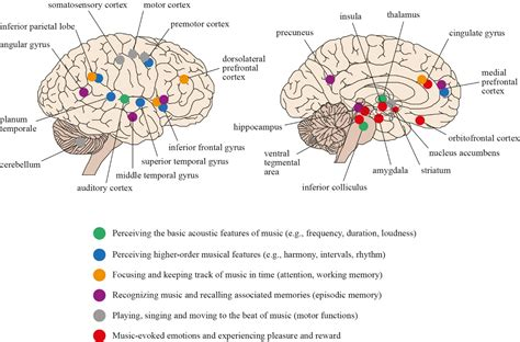 the lateralized brain the neuroscience and evolution of hemispheric asymmetries books therapy and neuroscience opportunities and