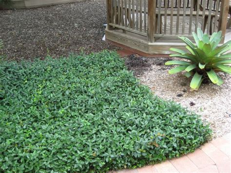 popular landscaping groundcovers and shrubs 17 best images about how does your garden grow trees