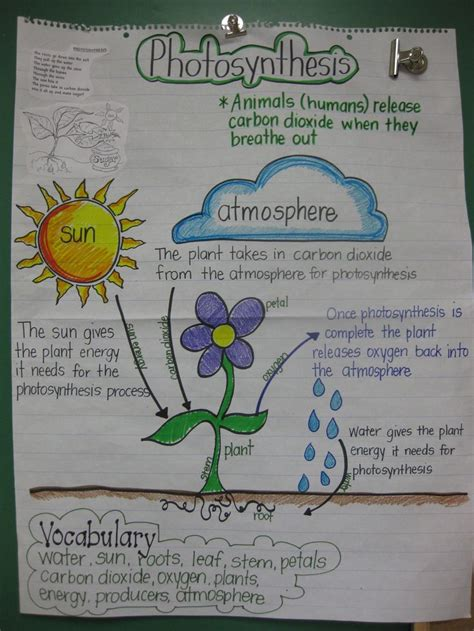 patterns in nature biology topic test staar review anchor chart for 5th grade science