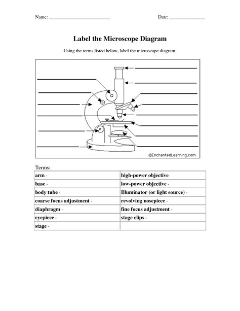 the compound light microscope worksheet 11 best images of light microscope diagram worksheet