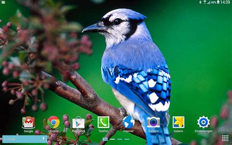 birds live wallpaper android apps on google play