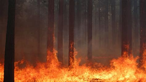 trees forest fire burning wallpaper