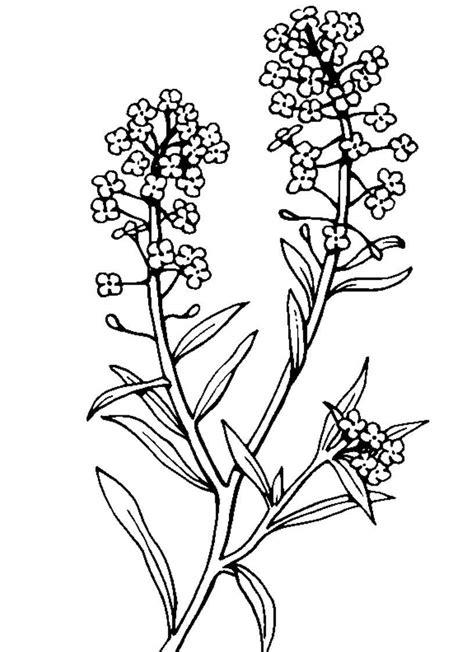 disegni di piante e fiori fiori da colorare mondo bimbo