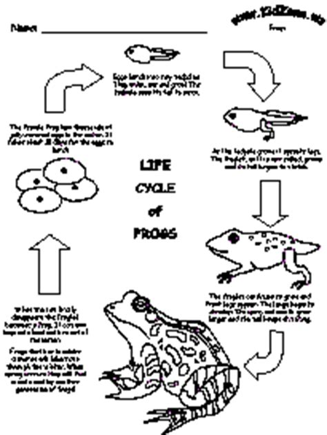 frog cycle template frog cycle this is because you can print it