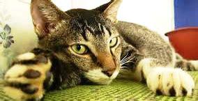 alimenti per ipertiroidismo ipertiroidismo nel gatto cure naturali e inquinamento