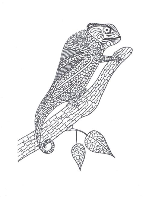 coloring pages for adults chameleon chameleon adult coloring page thriftyfun