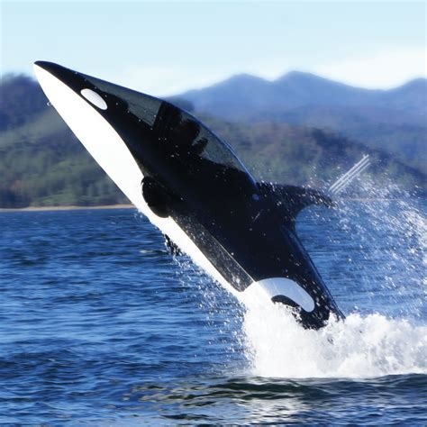killer whale the killer whale submarine hammacher schlemmer