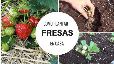 que plantar en casa como plantar fresas en casa